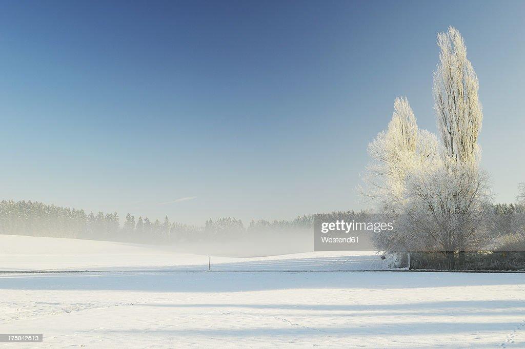 Germany, Baden Wuerttemberg, Villingen Schwenningen, View of rural winter scene : Stock Photo