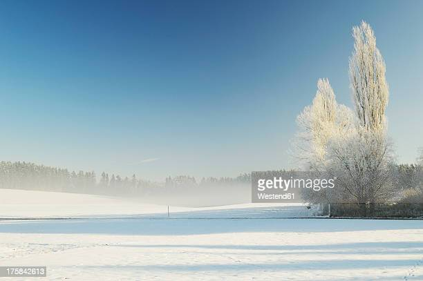 Germany, Baden Wuerttemberg, Villingen Schwenningen, View of rural winter scene