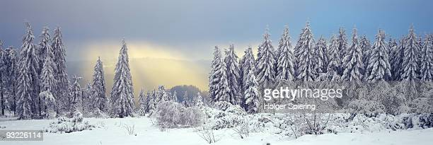 Germany, Baden-Wuerttemberg, Schwarzwald, Snow covered forest