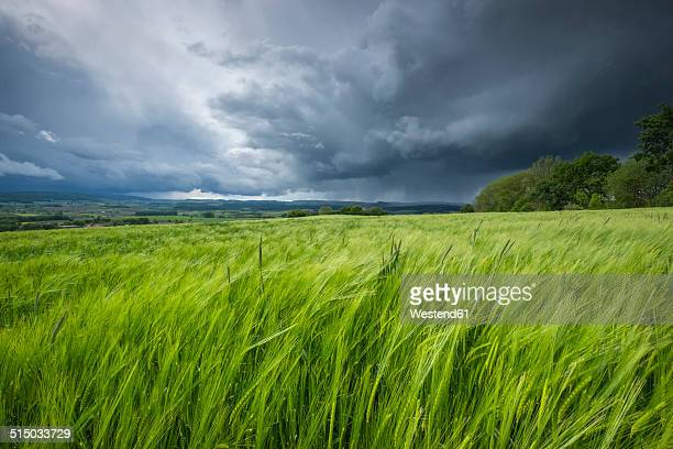 Germany, Baden-Wuerttemberg, Constance district, barkley field at Hegau by storm