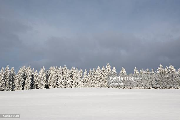 Germany, Baden-Wuerttemberg, Constance district, snow-covered firs