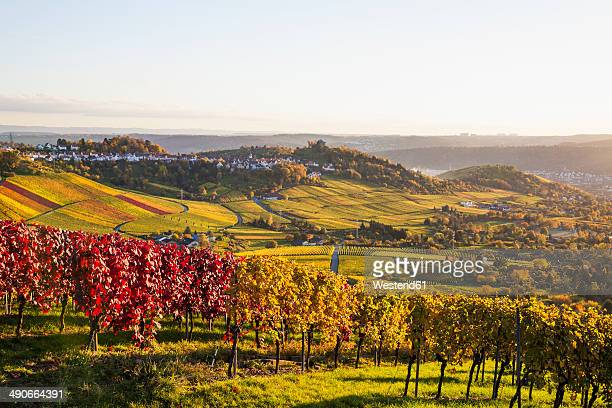 Germany, Baden-Wuerttemberg, Stuttgart, view over grapevines to Rotenberg
