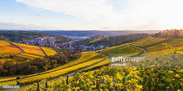 Germany, Baden-Wuerttemberg, Stuttgart, view over grapevines to Uhlbach