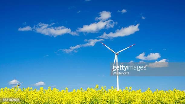 Germany, Baden-Wuerttemberg, Tomerdingen, wind wheel, rape field