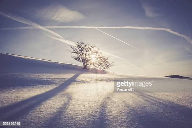 Germany, Baden-Wurttemberg, Swabian Mountains, Tree in snow covered landscape
