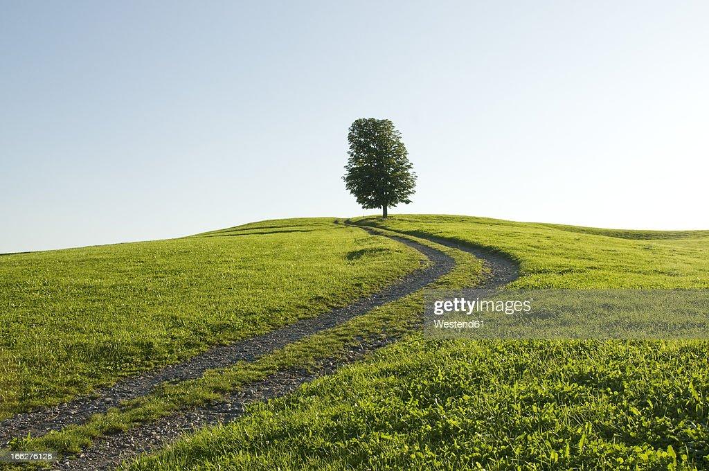 Germany, Bavaria, Allgau, Single tree next to farm track