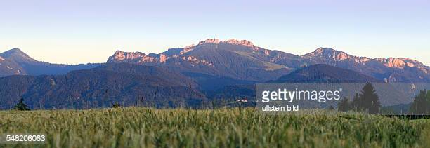 Germany Bavaria Bavarian alps red in sunset Kampenwand mountain seen from a field of Barley