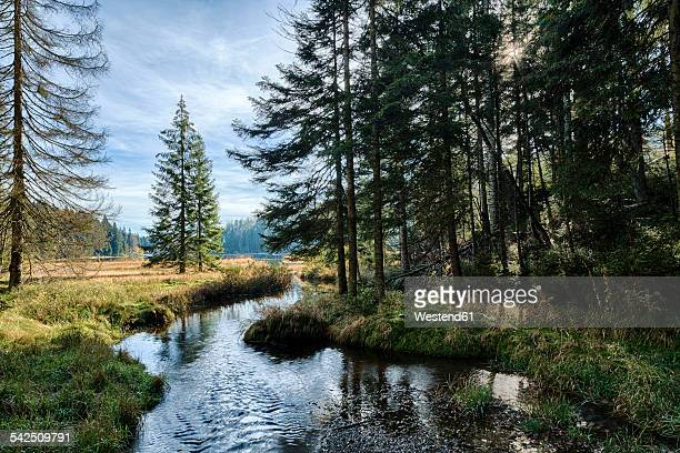 Germany, Bavaria, Bavarian Forest National Park, Lake Grosser Abersee in autumn