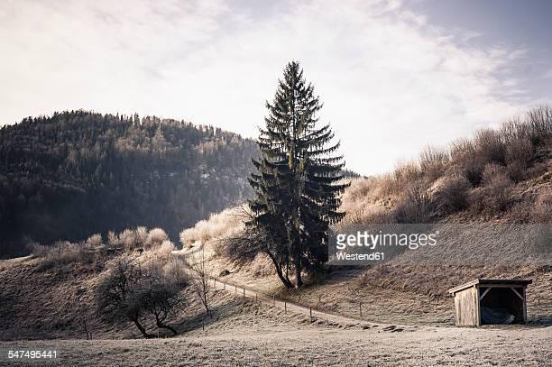 Germany, Bavaria, Berchtesgadener Land, rural landscape