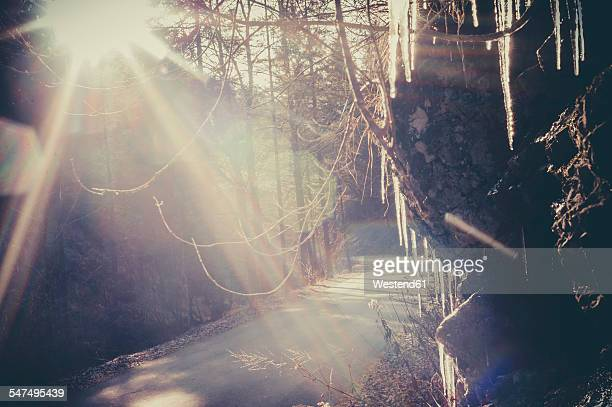 Germany, Bavaria, Berchtesgadener Land, sunbeam on rural road through forest
