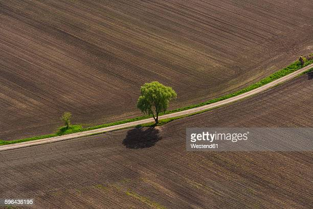 Germany, Bavaria, Dachau district, Plowed fields with single tree
