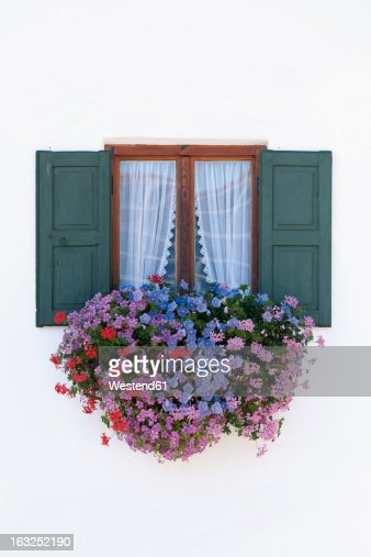 Germany, Bavaria, Geranium on window sill