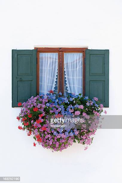 Germany, Bavaria, Geranium on window sill