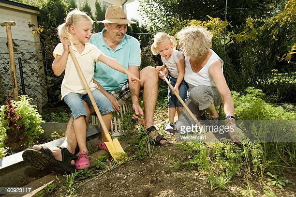 Germany, Bavaria, Grandparents with children working in vegetable garden