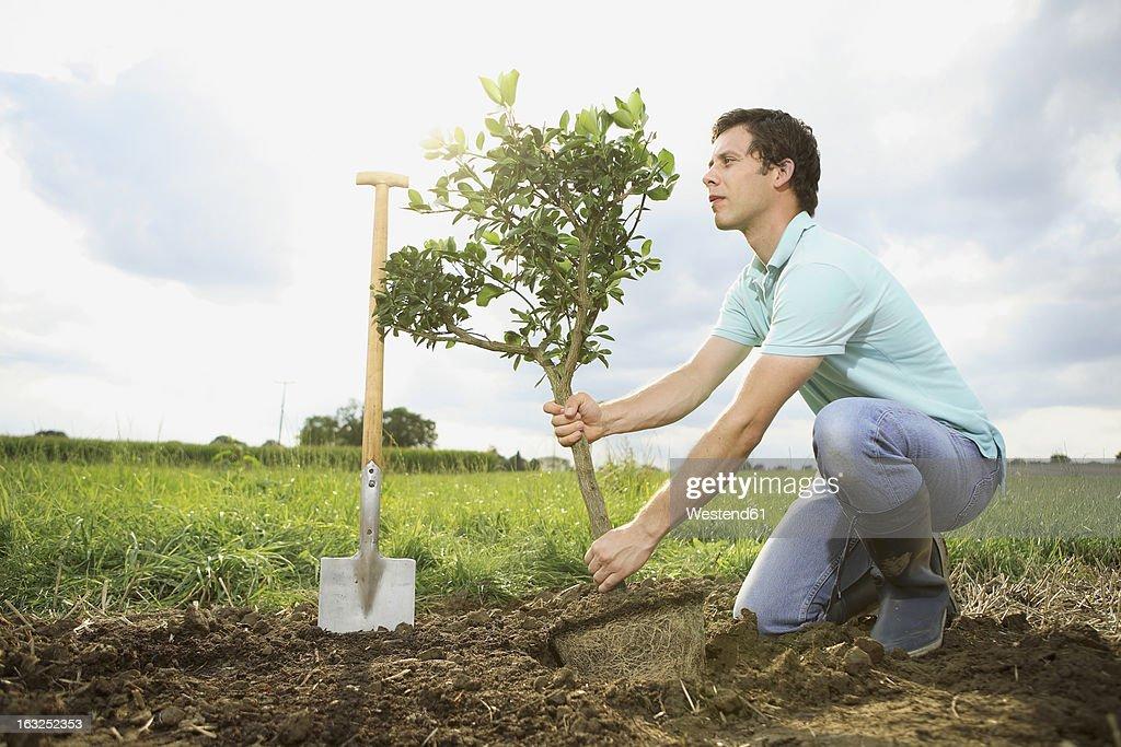 Germany, Bavaria, Mid adult man planting tree on field