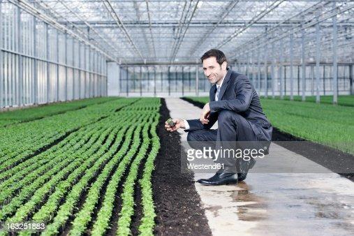 Germany, Bavaria, Munich, Mature man examining seedlings in greenhouse