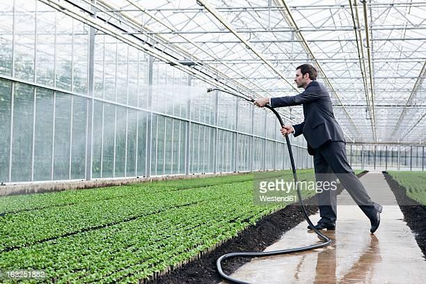 Germany, Bavaria, Munich, Mature man in greenhouse watering seedlings