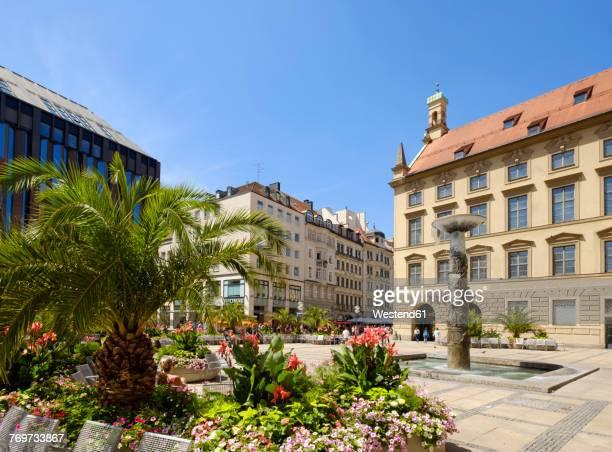 Germany, Bavaria, Munich, palm trees in pedestrain area