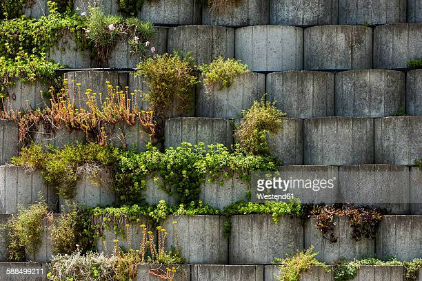 Germany, Bavaria, Otterfing, Plants in concrete stone garden