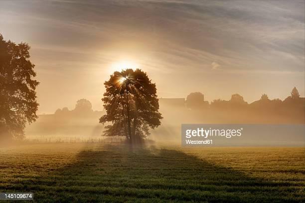 Germany, Bavaria, Upper Bavaria, Rupertiwinkel region, Abtsdorf, View of tree in morning with sunlight