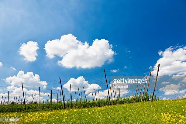 Germany, Bavaria, View of field