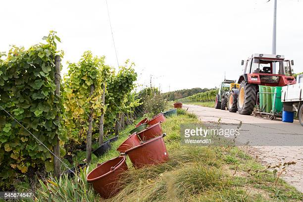 Germany, Bavaria, Volkach, grape harvest