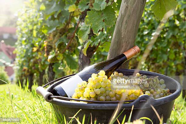 Germany, Bavaria, Volkach, harvested grapes and bottle of wine