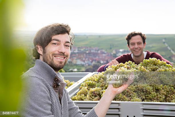 Germany, Bavaria, Volkach, two smiling winegrowers with harvested grapes