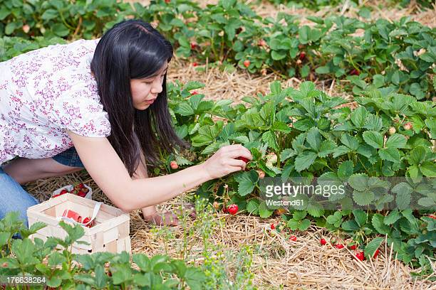 Germany, Bavaria, Young Japanese woman picking strawberries in field