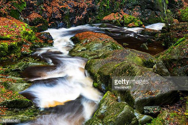 Germany, Bavarian Forest National Park, Steinbach gorge in autumn