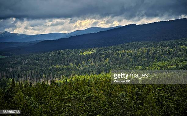 Germany, Bavarian Forest, view from canopy walk in Neuschoenau