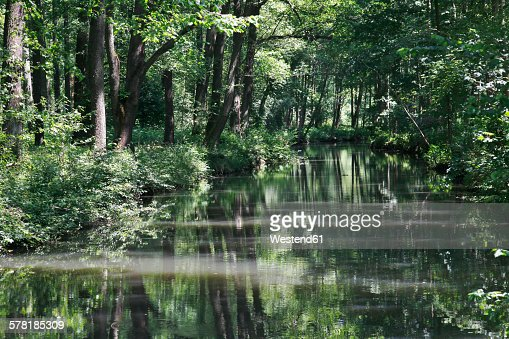 Germany, Brandenburg, Spreewald, River in the forest