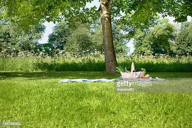 Germany, Cologne, View of picnic basket in meadow