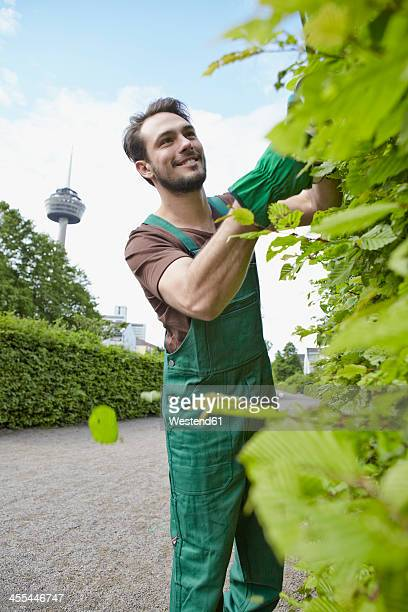 Germany, Cologne, Young man cutting leaves, smiling