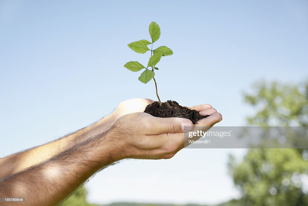 Germany, Cologne, Young man holding seedling