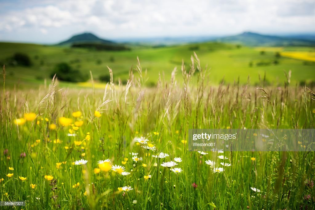 Germany, Constance district, landscape at springtime