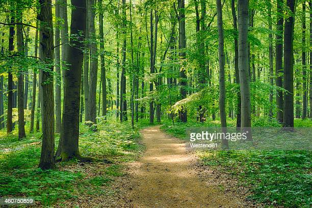 Germany, Footpath through beech
