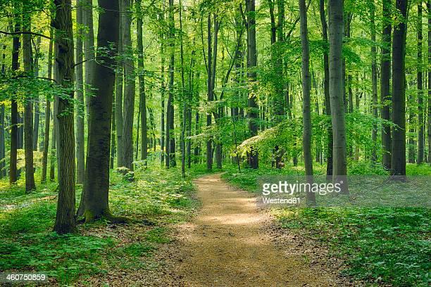 Germany, Footpath through beech