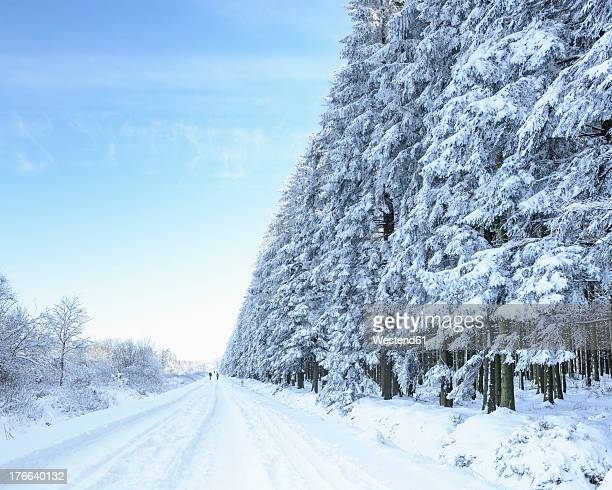 Germany, Forest road and fir trees with snow