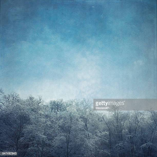 Germany, frost-covered treetops
