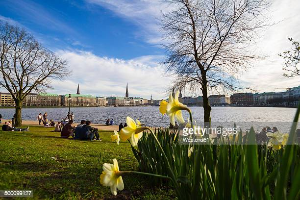 Germany, Hamburg, Inner Alster Lake in spring, daffodils in the foreground