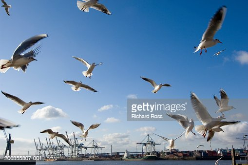 Germany, Hamburg, Port of Hamburg, seagulls flying : Stock Photo