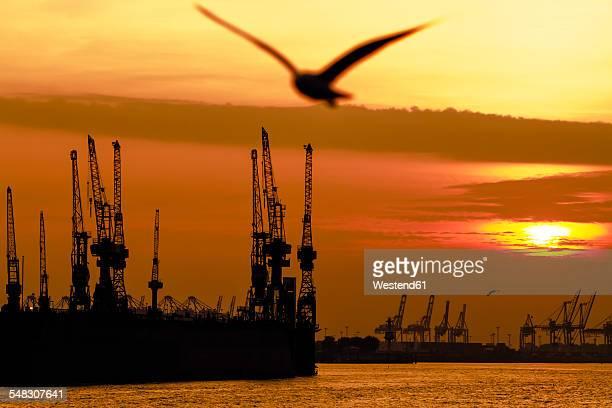 Germany, Hamburg, seagull at harbor at sunset
