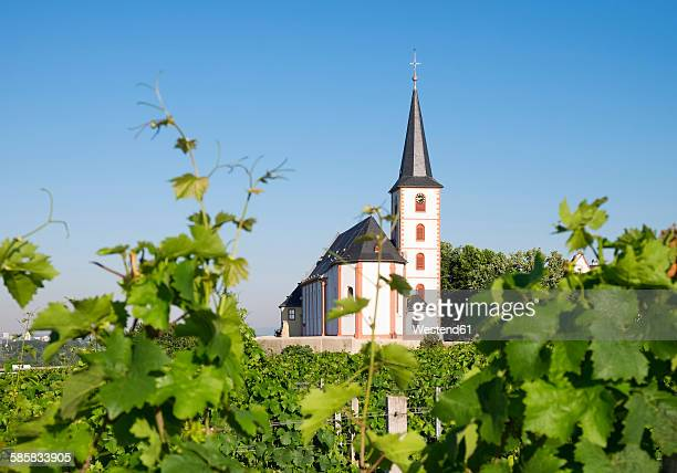 Germany, Hesse, Hochheim am Main, Vineyards and Church of Saint Peter and Paul