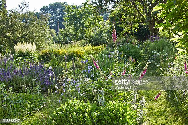 Germany, Hesse, Stedebach, view to cottage garden with foxgloves, Digitalis