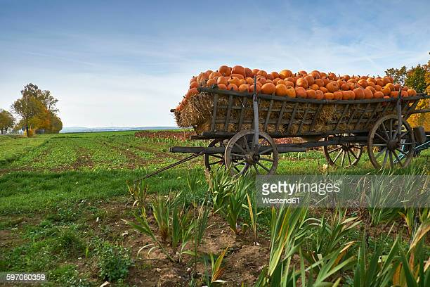 Germany, Kirchheimbolanden, harvested pumpkins on a cart