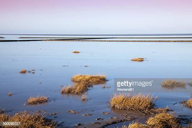 Germany, Lower Saxony, East Frisia, Lower Saxon Wadden Sea National Park