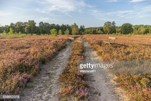 Germany, Lower Saxony, Heath district, Lueneburg Heath, bench by the wayside