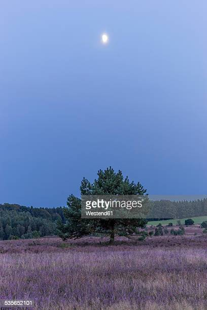 Germany, Lower Saxony, Heath district, Lueneburg Heath, evening twilight and moon