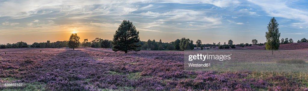 Germany, Lower Saxony, Heath district, Lueneburg Heath